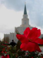 Houston Flower by eightball-599