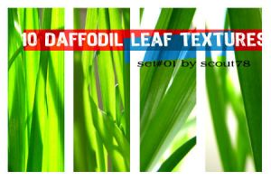10 daffodil leaf textures by scout78