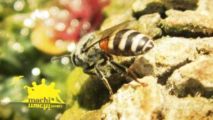 Bee Wallpaper by prakashkutti