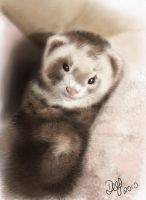 The Ferret by Wenchkin