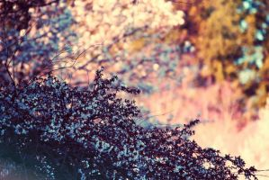 picture.spring by sarah-marley
