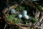 Close Up_Woven Large Bird Nest by 1stQueenOfHalloween