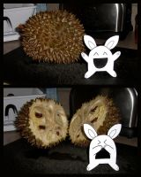 Durian by Cyle
