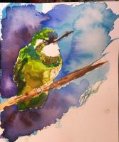 watercolor bird by juliemeynot