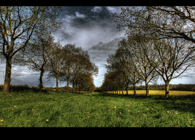 Althorpe's avenue by yatesmon