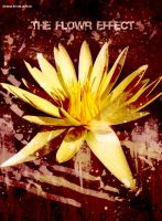The Flower Effect by Dm-Design