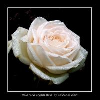 Pale Pink Crystal Rose 048 by Eolhin