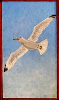 Jonathan Livingston Seagull by McFunkypants