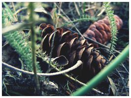 Pinecone by Kiltul