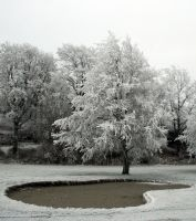 Icy tree by Sundseth