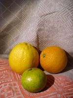 Citrus 1 by SanStock
