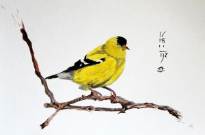 Goldfinch by Boio8010