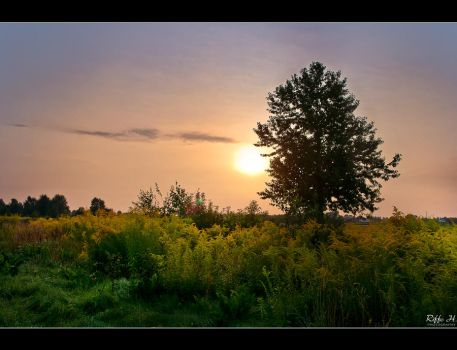 Late Summer 2 by Riffo