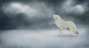 Winter Wolf by dann94