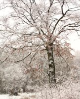 Winter by scotto