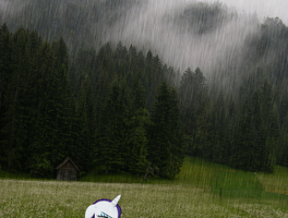 Rarity in the Rain -Animated- by Princessxpup