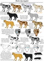 Dog Colors Guide- Merle by Leonca