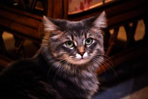 The Slant-Eared Cat by MNgreen