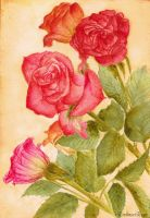 Roses by EvelineaErato