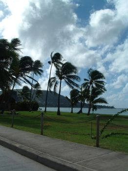 Palm Trees in the Wind by joequincy