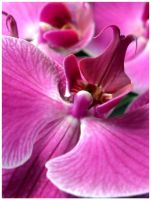 Orchid II by SuicideBySafetyPin