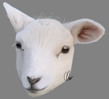 30JAN2015 Lamb Study by Crissiesaurus