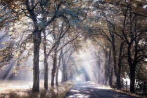 -When the Light comes from within- by Janek-Sedlar
