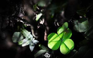 Emerald Enchantment by l8
