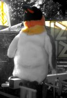 Penguin by musicismylife2010