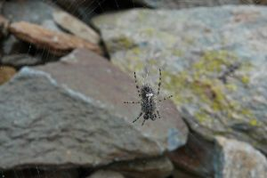 Spider On the Rocks by organicvision