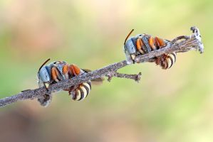 Bee on line by buleria