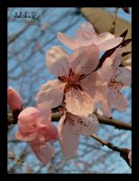 sping effect by ad-shor