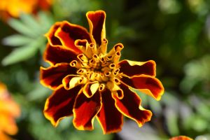 Unusual Flower by GorgeousWreck