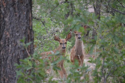 Fawns by Odnoder