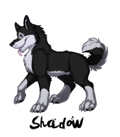 Shadow-D-Husky by BlackthornPubl