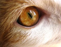 Cat's eye by Manonvr