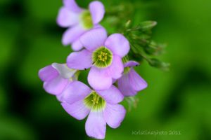 purple and green by Kristinaphoto