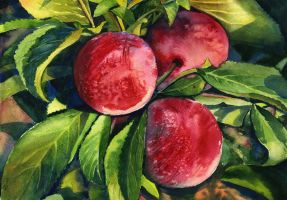 Plums by JoaRosa