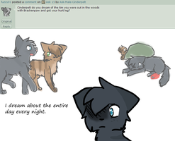 Ask 16 by Ask-Male-Cinderpelt