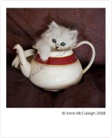 Teapot Chinchilla by substar