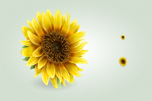 Sunflower icon by hbielen