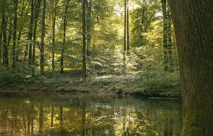 Forest reflections by EliseEnchanted