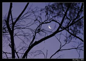 Moonlight Silhouette by DarthIndy