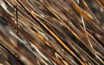 Dry Stipes 2560x1600 by hermik