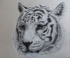 Bengal tiger by P-M-Rt