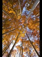 Autumn Convergence by GMCPhotographics
