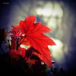 Feuille sur hiver. by hyneige