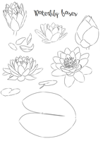 Waterlily Lineart Bases by Melchony