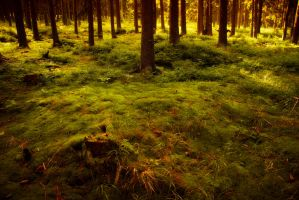 Furry moss by r3akc3