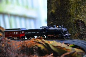 Rounding The Trunk by CSX5344